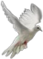 HO TitanicSunDeck White Dove-icon