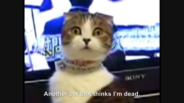 File:Hitler encounters the Dramatic Cat.png