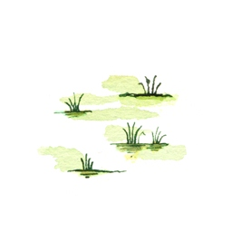 File:SwampB4 (2).jpg