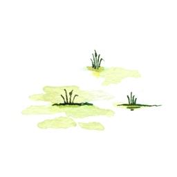 File:SwampB2 (2).jpg