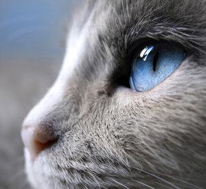 File:Splash kitten.jpg