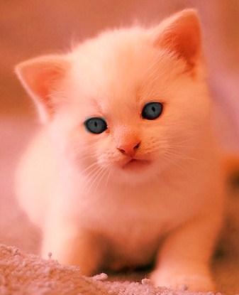 File:Kitten.jpg