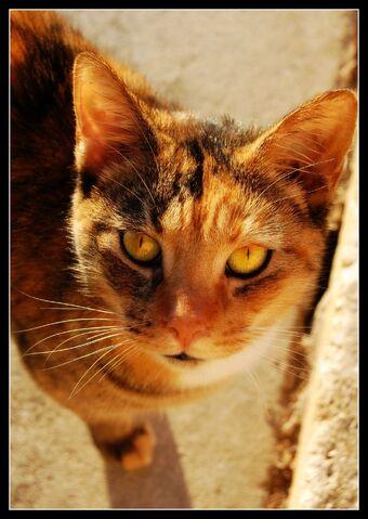 File:Golden Eyes by BlackieBear101.jpg