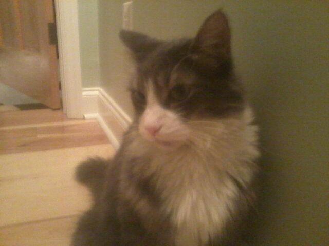 File:Plotting Kitty.jpg