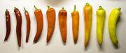 Pepper continuum