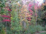 Backyard Fall Foliage