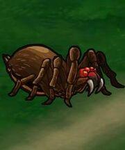 Frenzied Spider