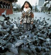 Kid gets mauled by pigeons
