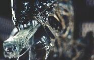 Alien-creature