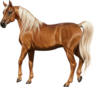 File:Arabian Mare Chestnut Flaxen.png