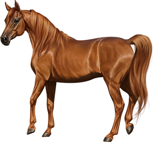 File:Arabian Mare Chestnut.png