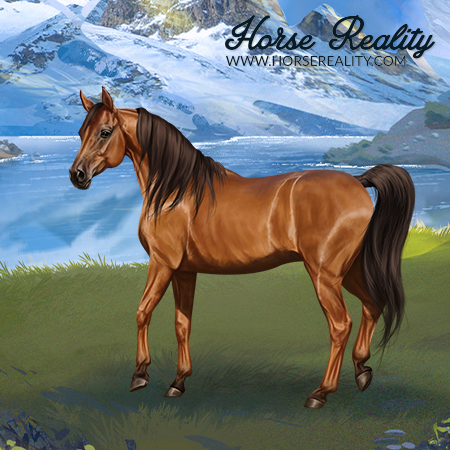 File:Arabian Mare Wild Bay.png