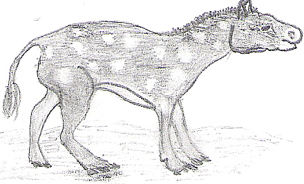 File:Eohippus drawing.jpg