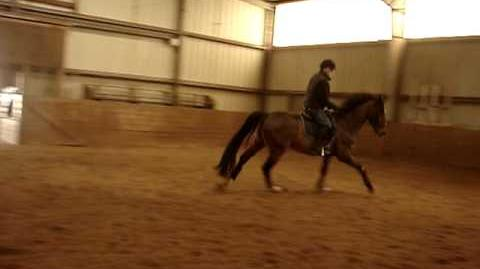 CANTER LESSON