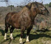 Murakoz-Horse