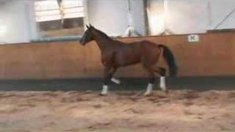 Equine Show Jumping Horse for Sale by Landos