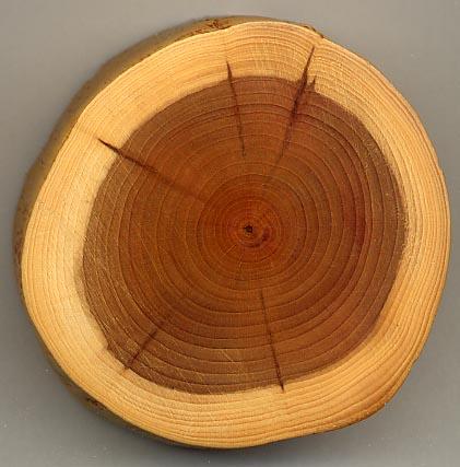 File:Taxus wood.jpg