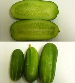 Persiancucumber