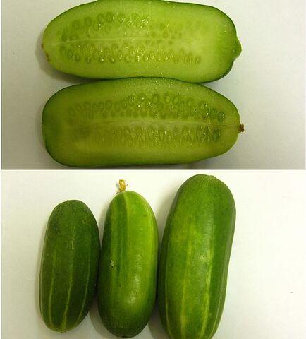 File:Persiancucumber.jpg