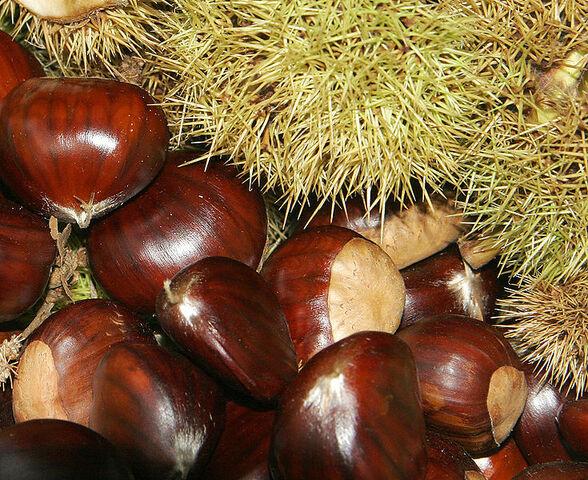 File:735px-Chestnuts02.jpg