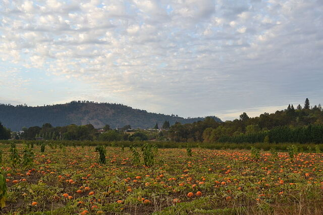 File:800px-Pumpkin Patch (Winchester, Oregon).jpg