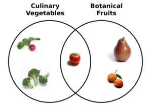 800px-Botanical Fruit and Culinary Vegetables