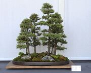 Multiple tree