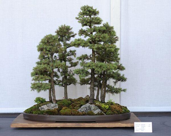 File:Multiple tree.jpg