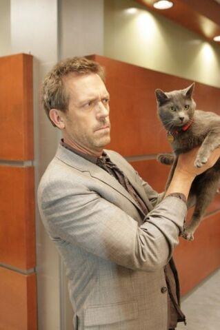 File:518 here kitty.jpg