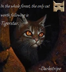 File:Tigerstar with quote.jpg