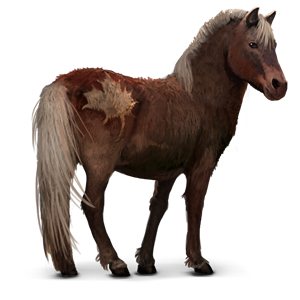 Image Wild Sable Island Pony Png Howrse Wiki