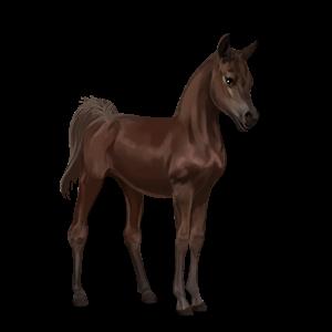 File:Arabian Foal - Liver Chestnut.png