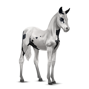 File:Paint Horse Foal - Black Tovero.png