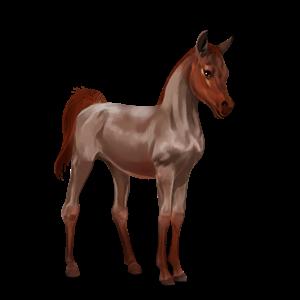 File:Arabian Foal - Strawberry Roan.png