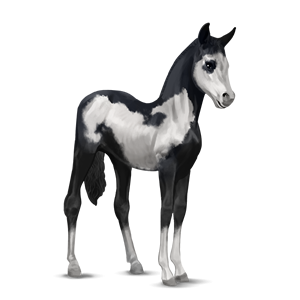 File:Paint Horse Foal - Black Overo.png