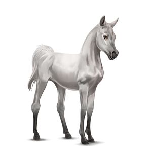 File:Arabian Foal - Light Gray.png