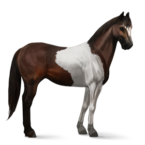 File:Paint Horse - Dark Bay Tobiano.png