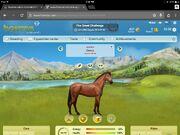 Yraeta's horse Chills