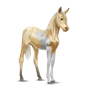 File:Paint Horse Foal - Palomino Tobiano.png