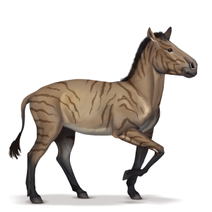 Hipparion.png