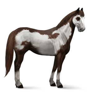 File:Paint Horse - Liver Chestnut Overo.png