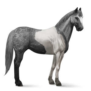 File:Paint Horse - Dapple Gray Tobiano.png