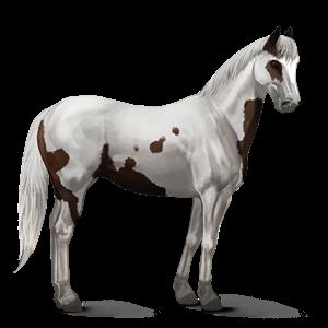 File:Paint Horse - Liver Chestnut Tovero.png