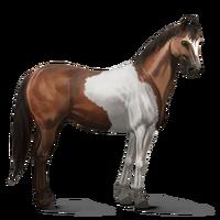 Paint Horse Brauner mit Tobiano-Scheckung Altes Design