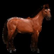 Massives Sportpferd Rotbrauner Altes Design