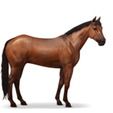 Quarter Horse.Rotbrauner