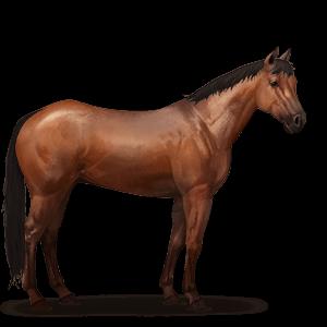 Quarter_Horse.Rotbrauner.png