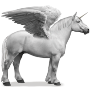 Percheron Schimmel Einhorn Pegasus