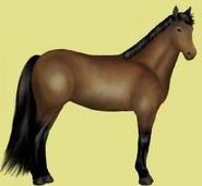 Don Pferd Brauner Alte Grafik 1