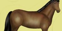 Don-Pferd